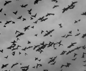 bird, sky, and animal image