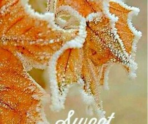 frost, snow, and leaves image