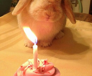 rabbit, bunny, and cake image