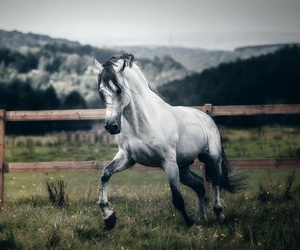 beautiful, equestrian, and mountains image