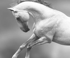amazing, horse, and nice image