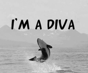 diva, funny, and whale image