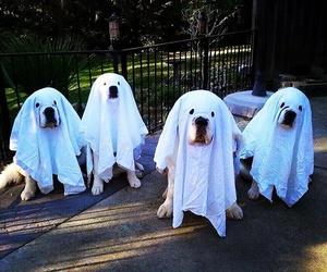 dog, ghost, and Halloween image