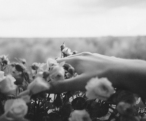 amazing, black and white, and flower image