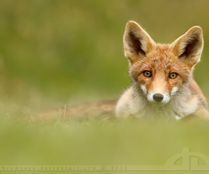 fox and photography image