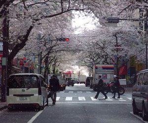 beauty, cherry blossoms, and china image
