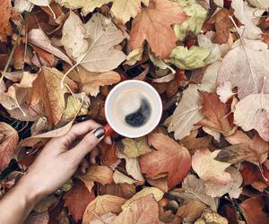 coffee and leaves image