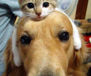 animals, pinterest, and cute image