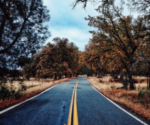 nature, road, and street image