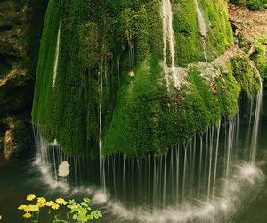 waterfall, nature, and green image