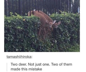 deer and friends image