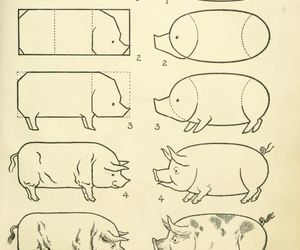 pig and how to draw image