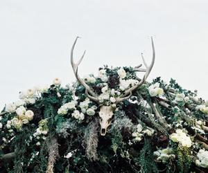 deer, flowers, and skull image