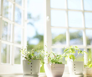 plants, window, and green image