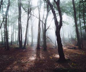 autumn, forest, and sunlight image