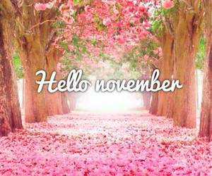 november, hello, and pink image