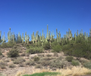 arizona, blue, and cactus image