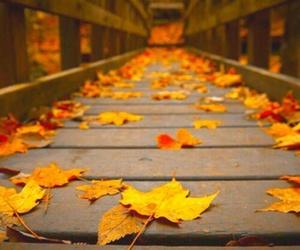 autumn, leaves, and bridge image