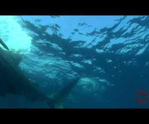 animal, sealife, and cancun image