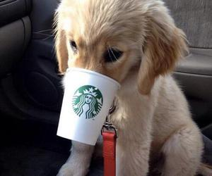 dog, cute, and starbucks image