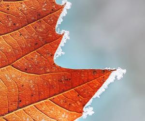 autumn, fall, and folha image