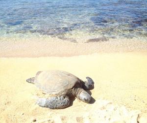 hawaii, turtle, and Oahu image