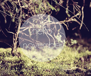 autumn, months, and november image