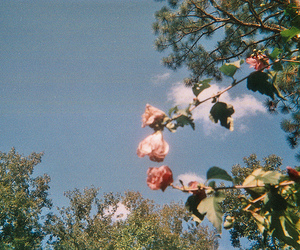 vintage, flowers, and sky image