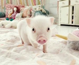 cute, adorable, and piggy image