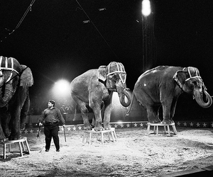 Coney Island, Cole Bros. Circus on Flickr - Photo Sharing!