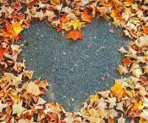 autumn, fall, and heart image