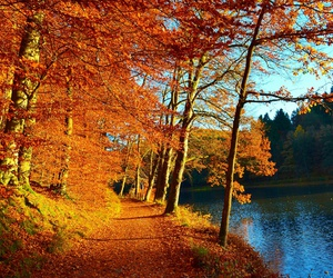 fall, forest, and green image