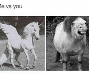 horse, hahahha, and lovely image