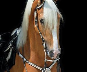 beautiful, sweet, and horse image