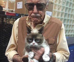 cat, funny, and stan lee image