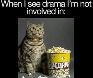 funny, cat, and drama image