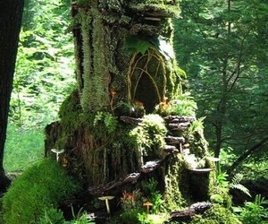 forest, fairy, and house image