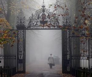autumn, fog, and gothic image