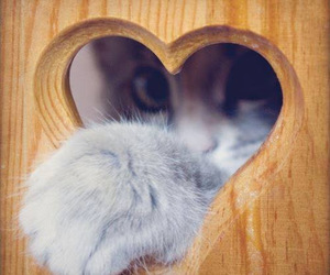 kitty and heart. image