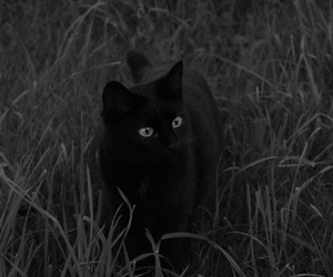 black and white, coco, and black cat image