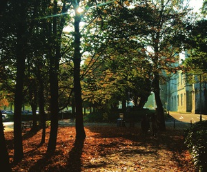 ireland and nature image