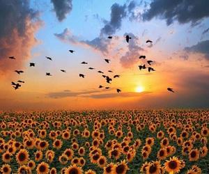 sunflower, birds, and sky image