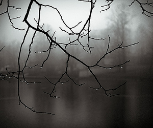 beautiful, branches, and lake image
