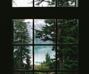 nature, window, and forest image