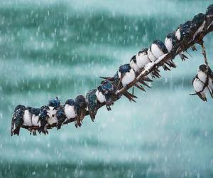 bird, snow, and animal image