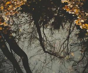 autumn, november, and rain image