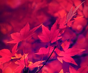 red, leaves, and autumn image