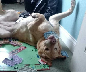 dog, funny, and monopoly image