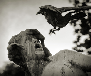 funny, statue, and bird image