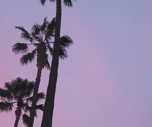 wallpaper, palms, and purple image